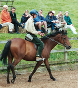 Adam Goodfellow Intelligent Horsemanship Recommended Trainer