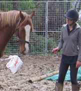 Jenny Major Intelligent Horsemanship Recommended Trainer