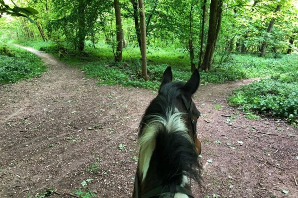 Pie explores the woods in Lambourn