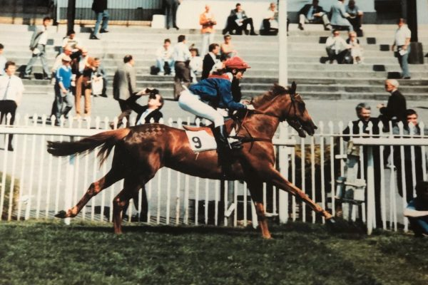 Toscana racehorse ridden by Kelly