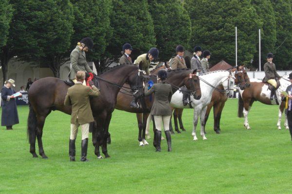 horses at shows
