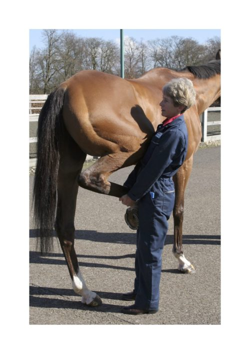 Sue Dyson working with a horse