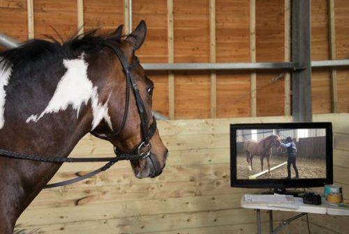 Pie Watching TV
