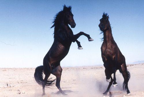 Kelly Marks (Intelligent Horsemanship) Namibian Horses